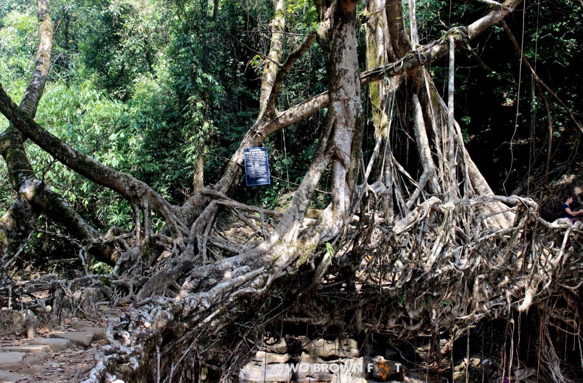 Day 3: Mawlynnong & the Single Decker Living Root Bridge