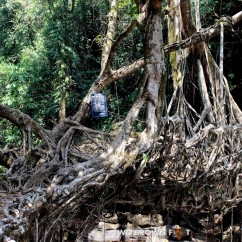 The Single Decker Living Root Bridge - View 2