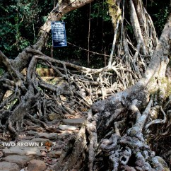 The Single Decker Living Root Bridge - View 1