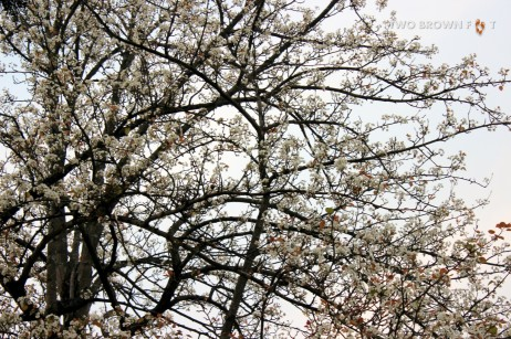 Riot of Blossoms