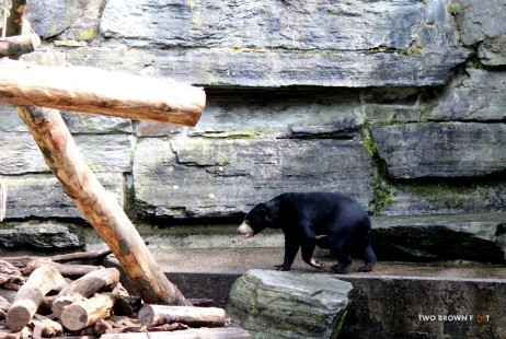 The lonely sloth bear