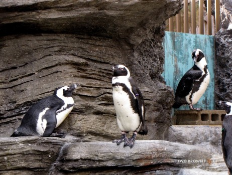 It was strange to see penguins in Japan. But, made me want to visit the Arctic.