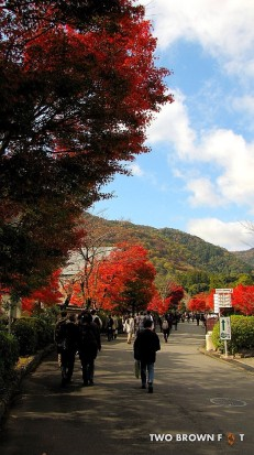 The pathway leading toward Tenryu-ji Temple