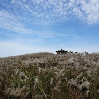 Best of East Jeju in a Day