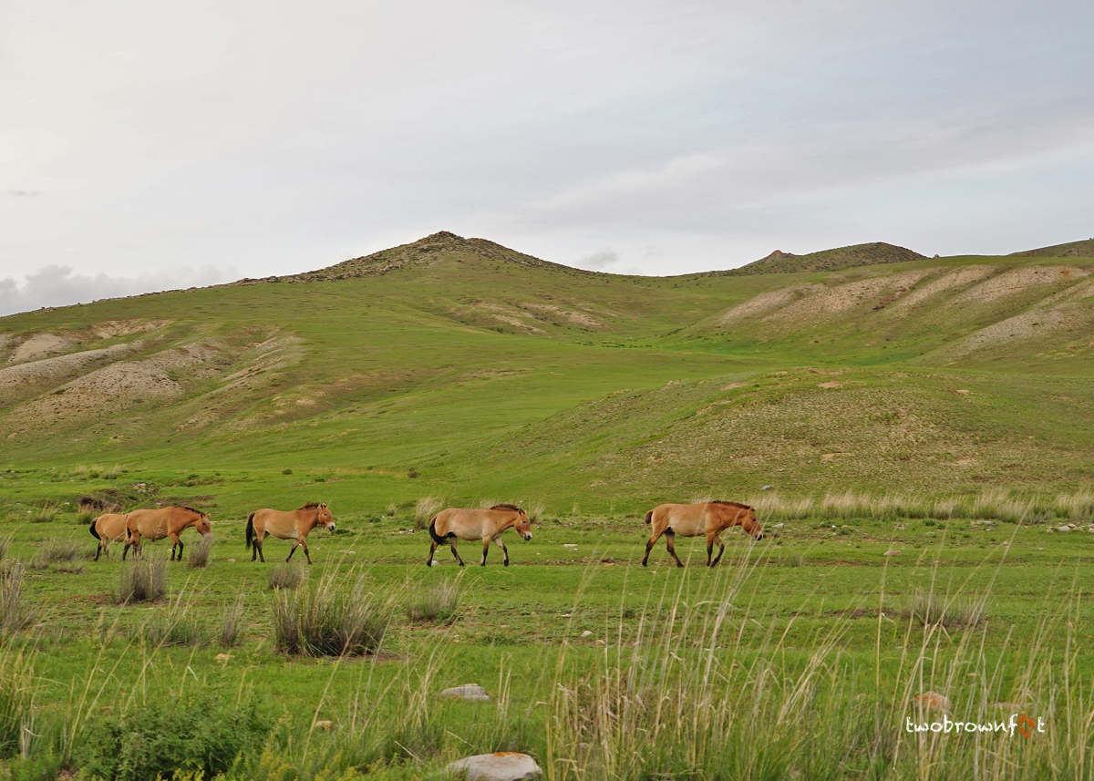 Chasing Clouds and Wild Horses in Mongolia