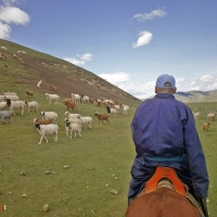 A Day in the Life of a Mongolian Nomad