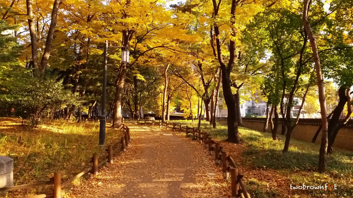 Best of Seoul's Parks & Gardens in Fall