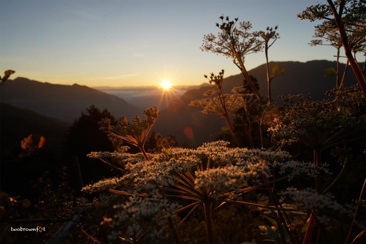 Sunrise at Taiwan's Hehuan Mountain