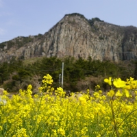 Canola Love at Sanbangsan Mountain