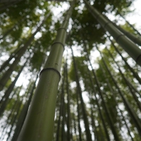 The Hidden Delights of Taehwagang Grand Park & Simni Bamboo Grove